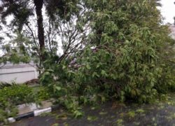 Chennai Cyclone Tree